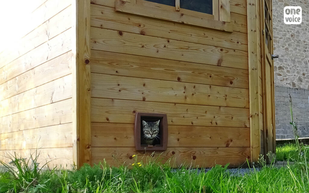 picture of cat in a shelter